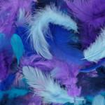 Plumes colorées 10 g - Bleu