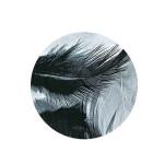 Plume décorative 3-10cm sachet de 10 assorties - Noir