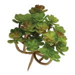 Succulent Sedum 11 x 10,5 cm