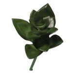 Mini-Succulent Haworthia 5 x 7,5 cm